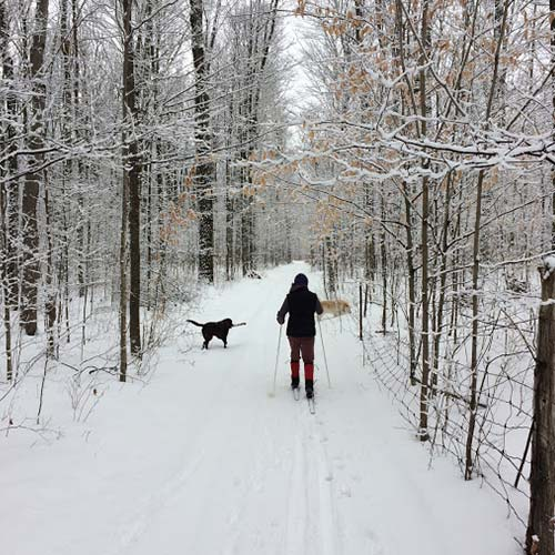 Dr Chelsea Corrigan skiing with 2 dogs